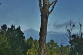 pohled domů na Tenerife